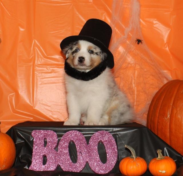 halloweenabe