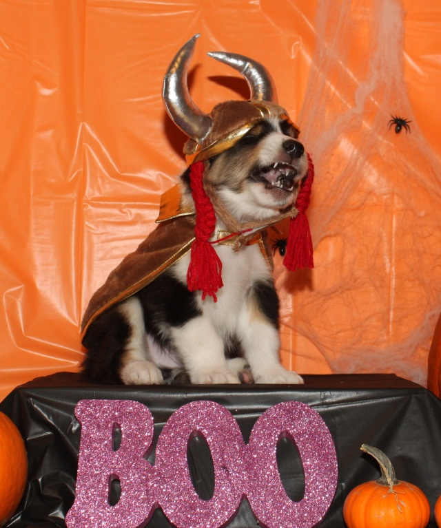 halloweenouttakeschief2