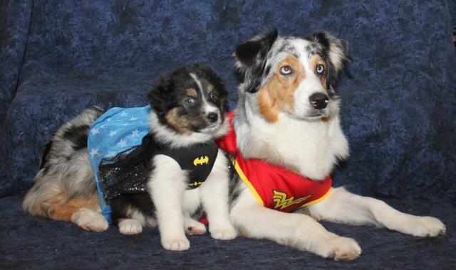 superheropunkin