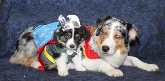 superheroturkey
