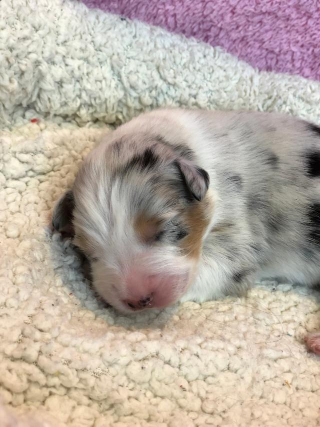 Puppy9Week1(2)
